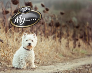 My Dog – WIN 1 of  5 $10,000 Cash Prizes