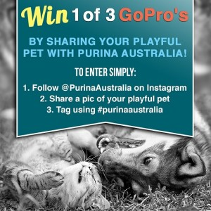 Purina – Win 1/3 Go Pro cameras – Share photo of pet on Instagram