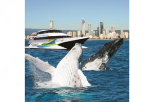 bmag – Win a Gold Coast Whale Watching Weekend