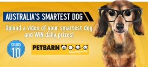 Tenplay – Share a video of your smartest dog to Win daily prizes