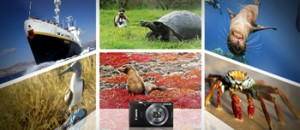 National Geographic Channel – Win a 10-day Galapagos Expedition aboard the National Geographic Endeavor for 2 valued at up to$25,000 OR 1 of 85 weekly prizes of a Canon IXUS 160BK Digital Camera