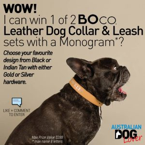 Australian Dog Lover –  Win 1 Of 2 Boco Leather Dog Collar  Lead Sets With A Monogram (your Dog's Name) In Time For #fathersday Thanks To Boco Australia A Designer Brand Of Lifestyle Accessories For Your Pooches