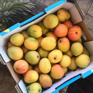Charlie's Fruit Market – Win A Tray Of KP Mangoes