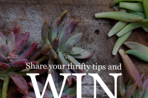The Plant Hunter – Win 2 X Packs of Plants From @plantsinabox (prize valued at $150)