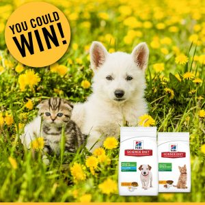 Petbarn – Hills 17 – Win 1 of 400 Premium Puppy & Kitten Food boxes valued at over $83 each