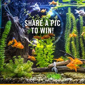 Petbarn – Win a new fish tank valued at $828