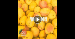 Aussie Mangoes – Win 1/5 Trays of Mangoes