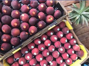 Charlie's Fruit market – Win a Tray of Yellow Flesh Nectarines