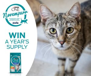 Purina Australia – Win one year's supply of Purina One cat food valued at over $237