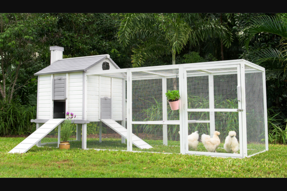 Backyard Chicken Coops - Win a Chicken Coop Package Today ...