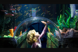 Child Magazine – Win a Pass to Sea Life Melbourne (prize valued at $99)