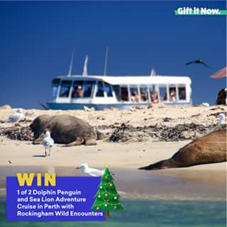 Gift It Now – Win 2 X Dolphin and Sea Lion Adventure Cruises In Perth With Rockingham Wild Encounters..