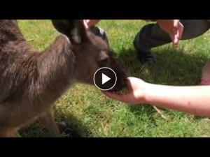 South Aussie with Cosi – Win a Family Pass to Cleland Wildlife Park??