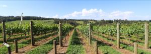 HGX – Beautiful Accommodation – Win a Mornington Peninsula Gourmet Getaway valued at $5,351