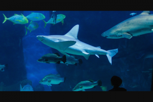 Discover Your Own Backyard – Win One of Two Sea Life Melbourne Aquarium Shark Dive Xtreme Experience Double Passes (prize valued at $598)