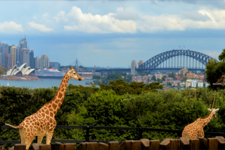 The Edge 96.1 – Win Tickets for You and 3 Friends to Taronga Zoo Listen to Mike E and Emma In Breakfast this Week
