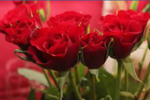 The Flower Crew – Win a Dozen Roses for Valentine's Day