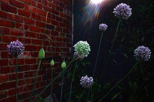 Sae Qantm & Madman – The Atom Photo Competition 2018