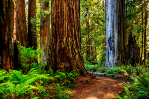 Lonely Planet – Win a Trip for Two to California's Redwood Coast