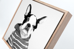 Verve Portaits – Win a Pet Photography Experience Valued at Over $2800 (prize valued at $2,800)