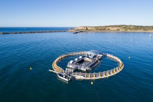 Bound Round – Oceanic Victor – Win a Family pass for an aquarium swim valued at AU$275