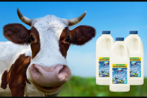 WSFM 101.7 – Win a Year's Supply of Milk From Dairy Farmers