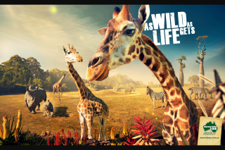The Ruby Collection – Win 1 of 2 Family Passes to Australia Zoo