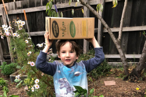 Thesagegarden – Win a A Composting Cannon