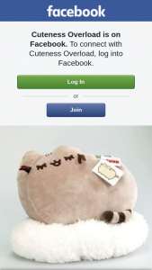 Cuteness Overload – Win this Large Pusheen Plushie From Pusheen Experts Cuteness Overload & Newsxpress