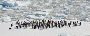 7Travel – Win a prize package including 2 seats on the Antarctica Flights day tour valued at $3,998