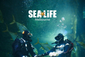 Melbourne Aquarium – Win an Incredible Underwater Wedding Photoshoot Surrounded By Sharks