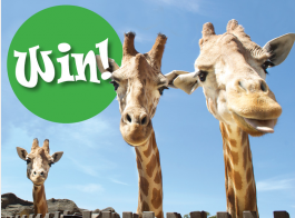 Think Local – Win 1 of 2 annual Family tickets to Taronga Zoo
