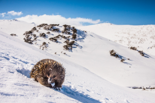 Adelaide Review – Win a Double Pass to The Australian Geographic Nature Photographer Exhibition at The South Australian Museum
