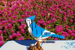 Loved up Cards – Win an Amazing 3d Blue Jay Bird Pop-Up Card to Show Your Love to this Month's Birthday Birds