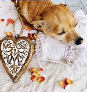 Tabitha Ann Bird Author – Win a Hand Carved Mango Wood Heart Ornament