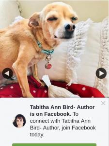 Tabitha Ann Bird Author – Win this Week You Can Win this Cute Little Birdie