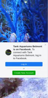 Tank Aquariums Belmont – Win 2 Clownfish