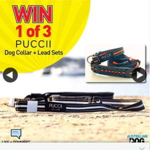 Australian Dog Lover – Win One of Three Puccini Dog Lead & Collar Sets (prize valued at $55)