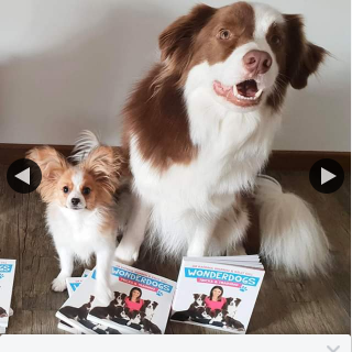 Dr Katrina – Win a Copy of My Wonderdogs Tricks and Training Book to Give You Some Fun Activities to Do With Your Dog During this Time of Social Distancing