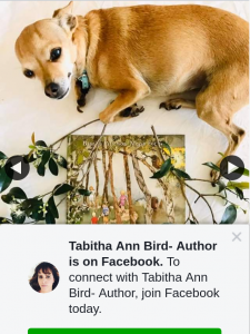 Tabitha Ann Bird Author – Win this Week We Have a Brand New Release Picture Book From The Very Talented Dannika Patterson Author Scribbly Gum Secrets Is Beautifully Illustrated By Megan Forward