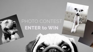 Minzoet – Win a Family Photography Experience valued at $6,000
