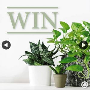 Caroma – Win a 6 Month Plant Delivery Subscription From Botantic Box