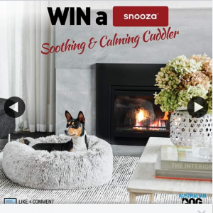 Australian Dog Lover – Win a Snooza Soothing & Calming Cuddler for Winter