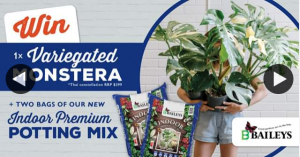 Baileys Grow Gardens – Win Variegated Monstera 2 Bags New Indoor Premium Potting Mix 15l