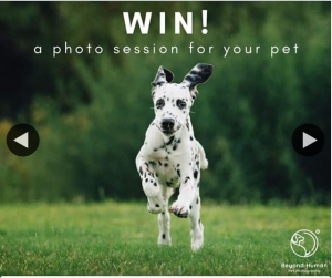 Beyond Human Pet Photography – Win a Photo Session for Your Furry Friend