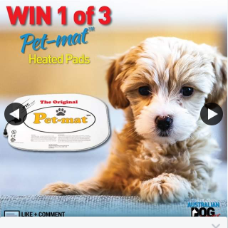 Australian Dog Lover – Win One of Three Pet Heated Mats to Keep Your Dog Warm on Freezing Winter Days