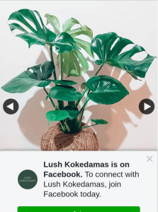 Lush Kokedamas – Win Monstera Plant