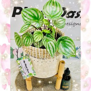 My plant oasis – Win a prize package