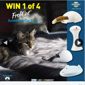 """Australian Cat Lover – Win"""" (photo & Video Entries Are Welcome)."""