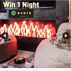 Australian Dog Lover – Win 1 Night at Ovolo Hotels (2 People 1 Or 2 Dogs)  (prize valued at $359)
